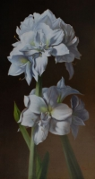 White Amaryllis--SOLD