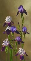 Irises --SOLD